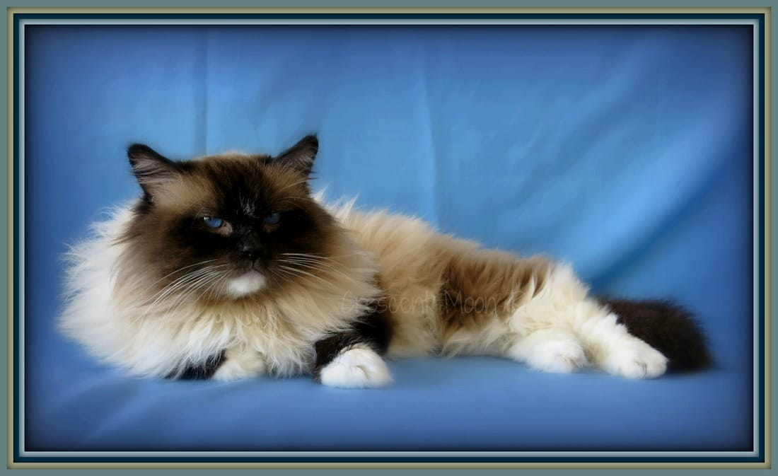 Ragdoll cats for sale southern california